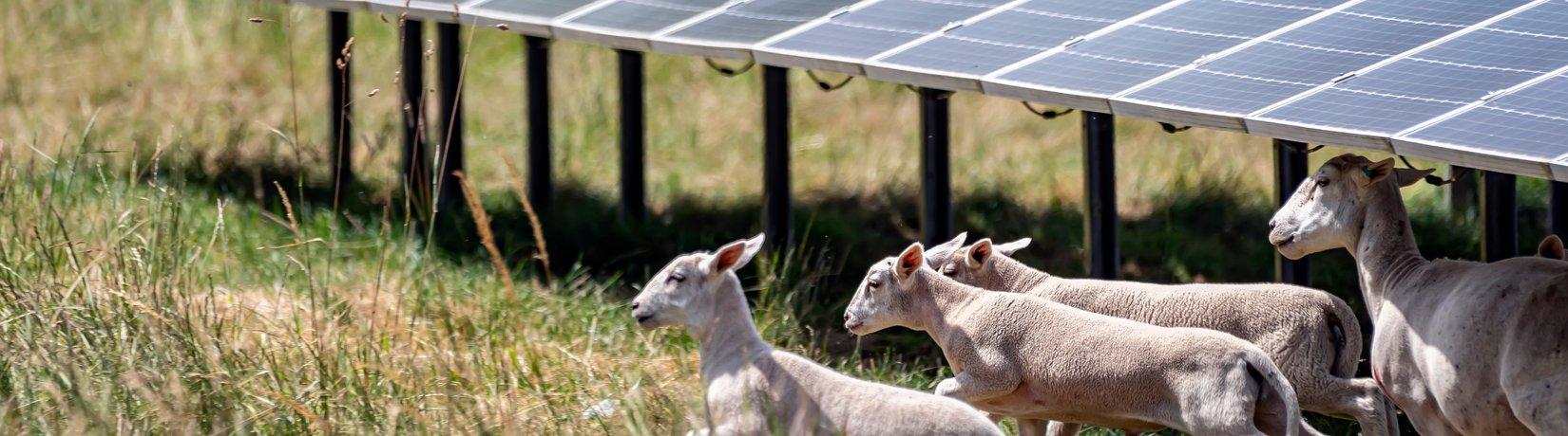Header Fakten Photovoltaik Solarzellen